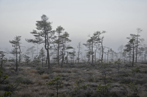 Lars G Truedsson-04 Apri
